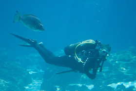 Diver and Friend